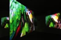 installation ICIA parrot