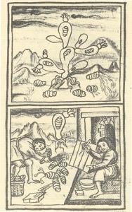7 nocheztli florentine codex