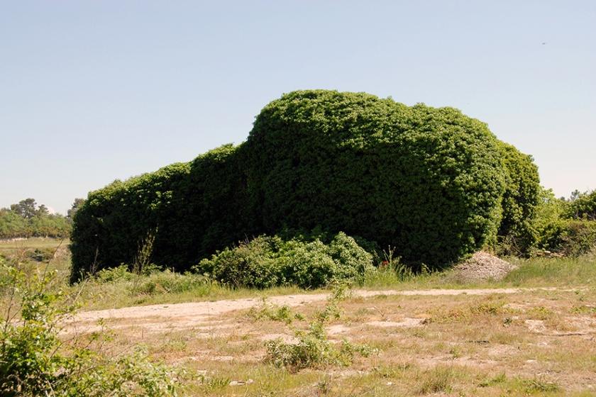 El Plantoceno